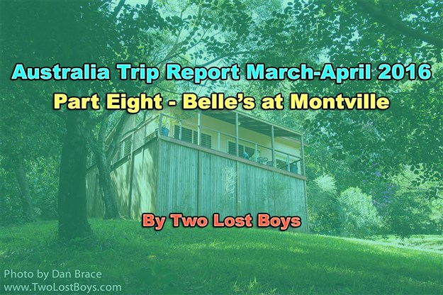 Australia March-April 2016 Trip Report, Part 8 - Belle's at Montville