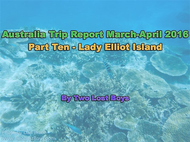 Australia March-April 2016 Trip Report, Part 10 - Lady Elliot Island
