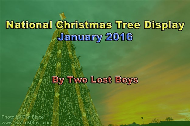Visiting The National Christmas Trees January 2016 Two Lost  - Visiting The National Christmas Tree