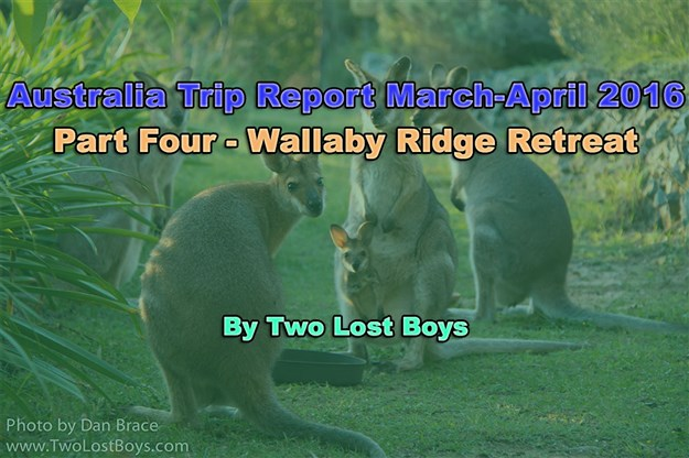 Australia March-April 2016 Trip Report, Part 4 - Wallaby Ridge Retreat